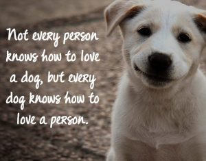 best-quotes-for-dogs-with-images-3
